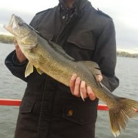 Walleye are about to be C&R and musky season upon us
